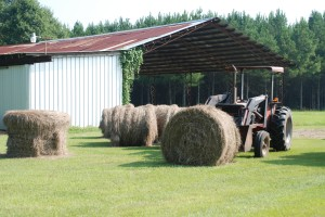 """This was from the first hay season after daddy died, and I had to """"get it done.""""  It was me and the old tractor."""
